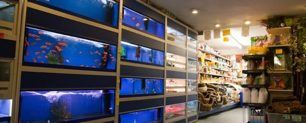 Firthfield pet store visit northwich cheshire for Go fish store
