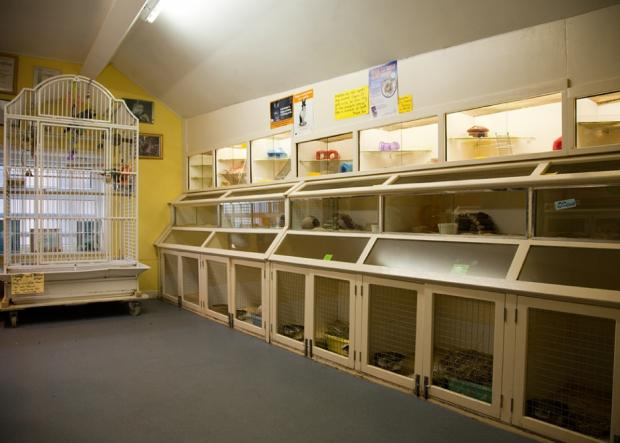 Firthfield Pet Store - Small Animals, Reptiles and Birds