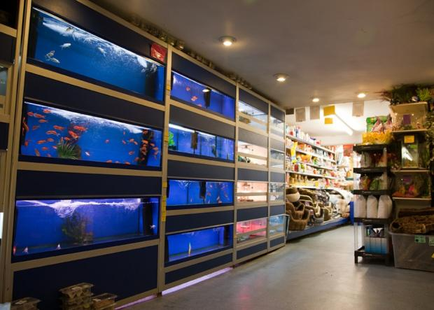 Firthfield Pet Store - Cold Water Fish, Food and Accessories